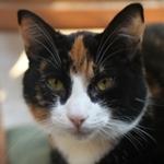 270x240 moxie cat - credit liz bergstrom