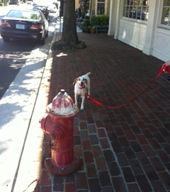 At a fire hydrant in Middleburg