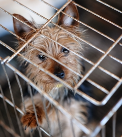 TX Puppy Mill