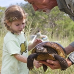 Gopher Tortoise Relocation Project