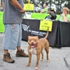 Pets For Life Atlanta Event