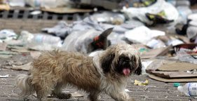 Shaggy dog in New Orleans after Hurricane Katrina