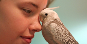 Teenage girl and gray cockatiel