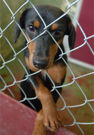 Black and tan dog at Louisiana SPCA