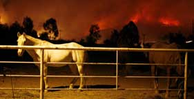 Horses in a pen as fire threatens San Diego, California