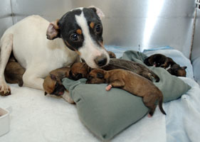 Dog rescued from Virginia puppy mill with newborn pups