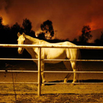 California wildfires behind a horse in pasture
