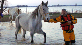 Horse led out of Missouri floodwaters