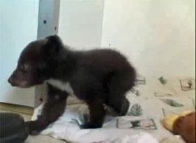281x205_bear_cub