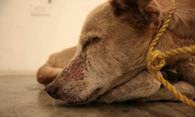 Street dog used in art exhibit