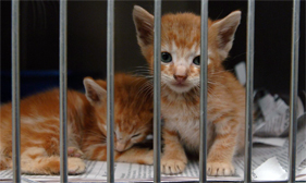 Two kittens at a Mississippi animal shelter