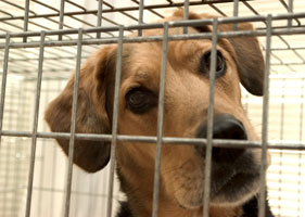 281x200_shelter_dog_istock