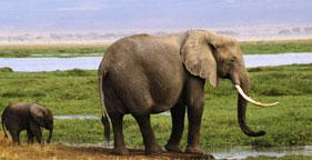 Elephant_jpeg_2