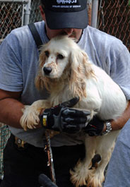 Spaniel dog rescued from W. Va. puppy mill