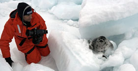 Nigel Barker photographs baby harp seals in Atlantic Canada