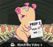 Yesonprop2_pig_vid