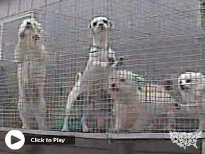Tell Petland to Stop Selling Puppies -- Watch This Video, Then Take Action