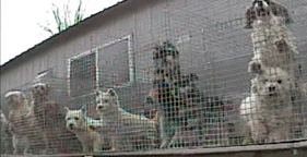 Puppy mill that supplies Petland